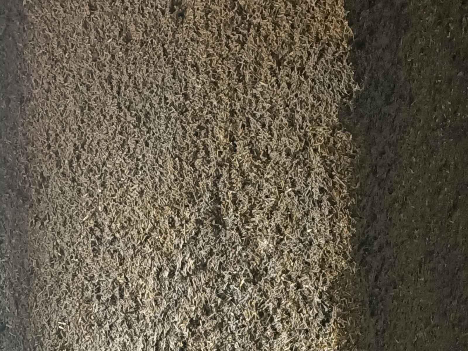 aspect-béton-chanvre-après-projection-murs-bâti-ancien
